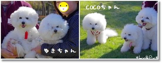 4_20121121034036.jpg
