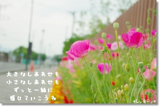 IMGP6327.jpg