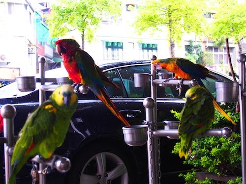 Birds in Taipei③
