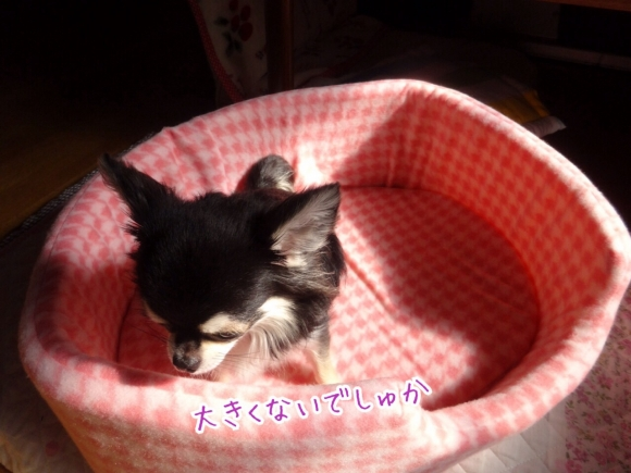 20140927224346f59.jpg