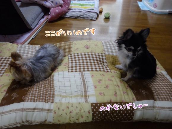 201411201152408e9.jpg