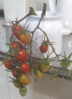 切りトマト