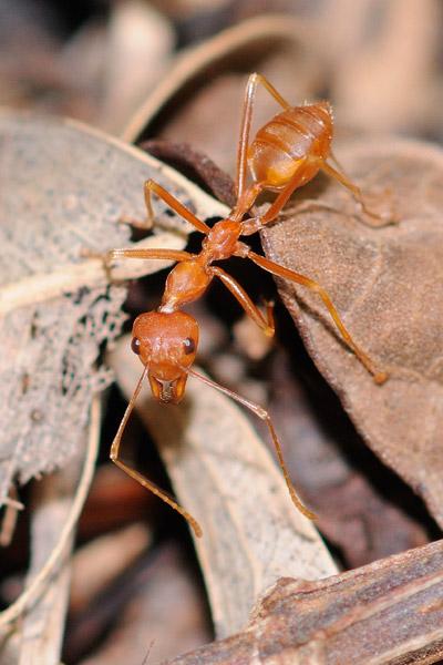 Ant#2