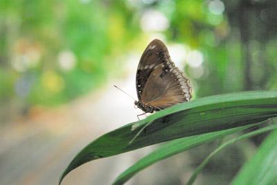#3Apr21,2011,ChiangMai