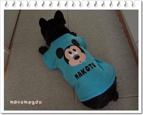 makoT5.jpg