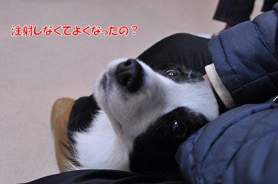 20120417-kyo01.jpg