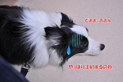 20120417-kyo02.jpg