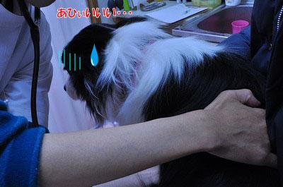 20120417-kyo03.jpg