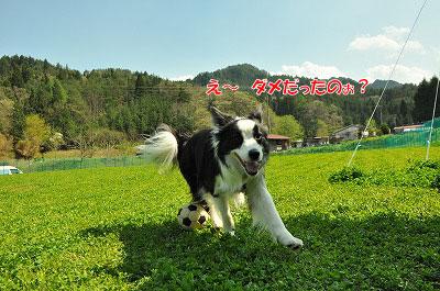 20120505-wan11.jpg