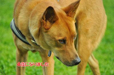 20120505-wan16.jpg