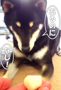 141119_nashi.jpg