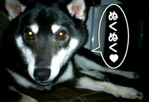 20141201_inkotatsu.jpg