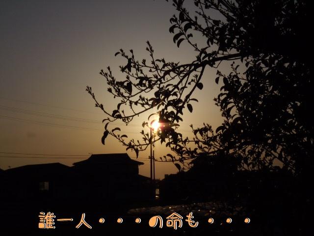DSCN0380.jpg