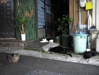 amamiooshima186.jpg