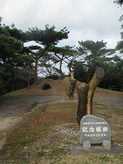 amamiooshima190.jpg