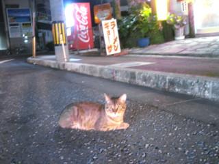 amamiooshima252.jpg