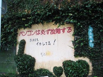 amamiooshima272.jpg