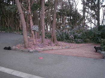 ito-zyogasaki1.jpg
