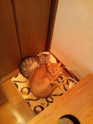 レオ&ミミー2012.6.6
