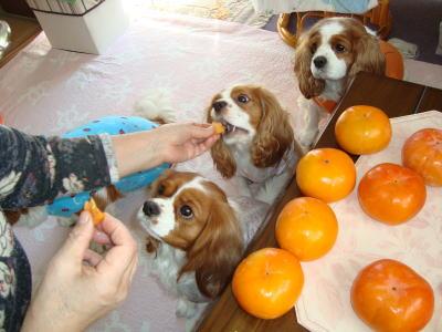 柿 大好き 4