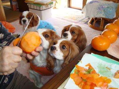柿 大好き 11