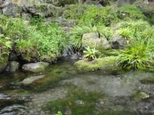 ひかり輝く自然界からのおくりもの-浅間大社禊所