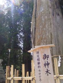 ひかり輝く自然界からのおくりもの-中社ご神木2