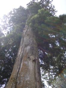 ひかり輝く自然界からのおくりもの-戸隠中社ご神木