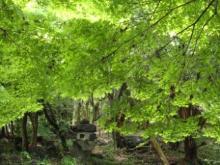 ひかり輝く自然界からのおくりもの-湧玉池もみじ