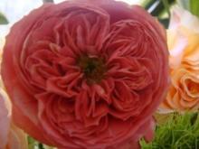 ひかり輝く自然界からのおくりもの-郁ちゃんバラ