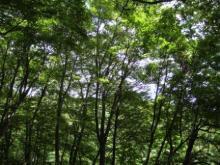 ひかり輝く自然界からのおくりもの-白神山地ブナ林