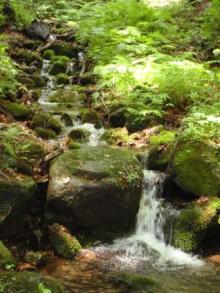 ひかり輝く自然界からのおくりもの-白神山地小川