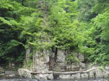 ひかり輝く自然界からのおくりもの-白神山地道