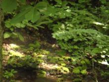 ひかり輝く自然界からのおくりもの-ミニ白神湧水