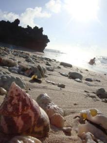 ひかり輝く自然界からのおくりもの-海2