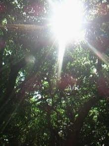 ひかり輝く自然界からのおくりもの-セーファウタキ森