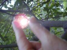 ひかり輝く自然界からのおくりもの