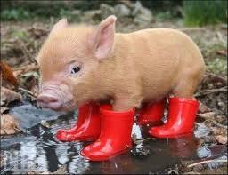 porco.jpg