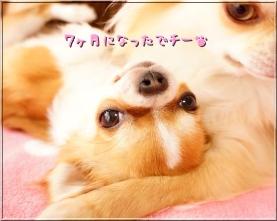005_20120509113407.jpg