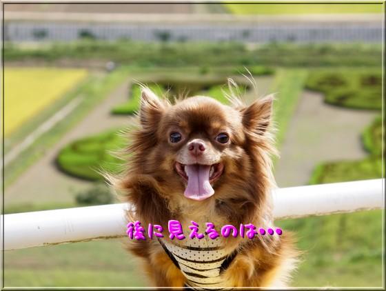 010_20120828110820.jpg