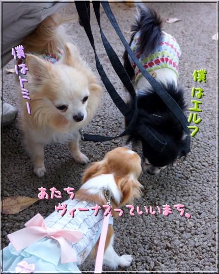 010_20121005204652.jpg