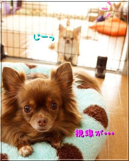 011_20121102195941.jpg