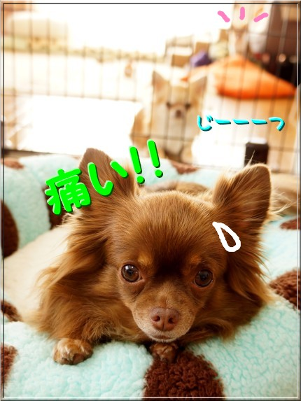 012_20121102195941.jpg