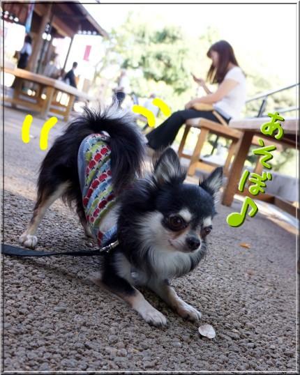 022_20121005204811.jpg