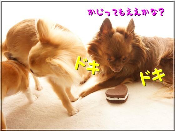 053_20121013150636.jpg