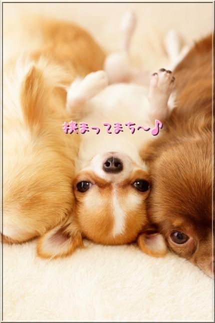 069_20120803152717.jpg