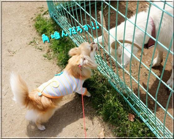 103_20120514211245.jpg