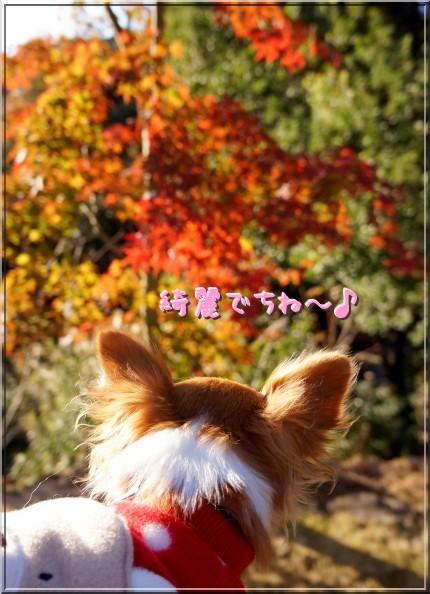 129_20121117114937.jpg