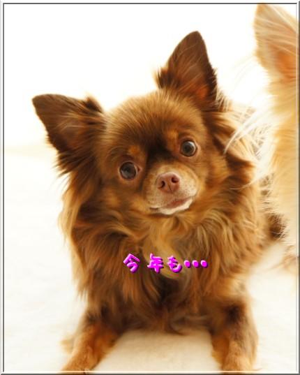 DSC00239_20121231000831.jpg