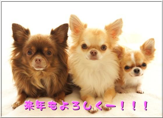 DSC00269_20121231000940.jpg